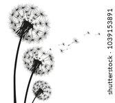 silhouette of a dandelion on a... | Shutterstock . vector #1039153891
