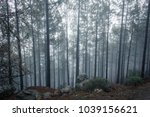 deep forest with tall  thin... | Shutterstock . vector #1039156621