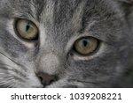 feline face   close up view | Shutterstock . vector #1039208221
