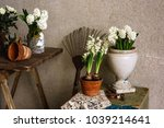 in the gardener's workshop.... | Shutterstock . vector #1039214641