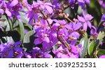 beautiful springtime flowers | Shutterstock . vector #1039252531