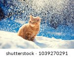 portrat of a little kitten ... | Shutterstock . vector #1039270291