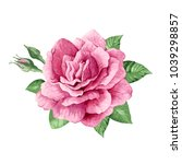 Stock vector single pink rose buds and leaves in watercolor style isolated on white background art vector 1039298857