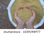 diammonium phosphate  dap  the... | Shutterstock . vector #1039298977