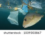 fish and plastic pollution.... | Shutterstock . vector #1039303867