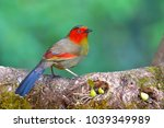 beautiful colorful bird  red... | Shutterstock . vector #1039349989