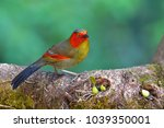 beautiful colorful bird  red... | Shutterstock . vector #1039350001