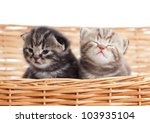 Two Funny Small Kittens In...