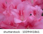 blur floral background lush... | Shutterstock . vector #1039441861
