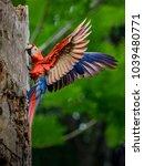beautiful bird is flying | Shutterstock . vector #1039480771