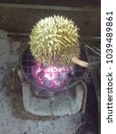 durian roasted light onion to...