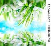 beautiful snowdrops flower...   Shutterstock . vector #1039499731