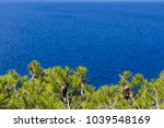 beautiful green pine trees  ... | Shutterstock . vector #1039548169