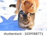 street cats make love in the... | Shutterstock . vector #1039588771