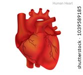 human heart isolate ... | Shutterstock .eps vector #1039589185