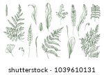 fern realistic collection. hand ... | Shutterstock . vector #1039610131