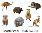 Collage of australian animals ...