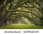 oaks avenue charleston sc... | Shutterstock . vector #103966529