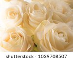 Stock photo white delicate and beautiful tender roses soft focus women s holiday th march celebration gift 1039708507
