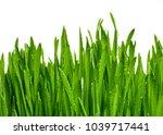 texture of a bright green fresh ... | Shutterstock . vector #1039717441