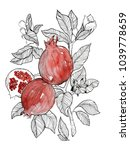 line pomegranate fruit with red ... | Shutterstock . vector #1039778659