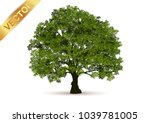 beautiful tree on a white... | Shutterstock .eps vector #1039781005