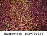 fresh coffee beans texture...   Shutterstock . vector #1039789165