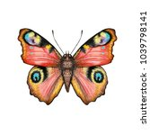 illustration butterfly... | Shutterstock . vector #1039798141