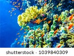 underwater coral fishes... | Shutterstock . vector #1039840309