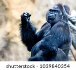 big gorilla king kong portrait | Shutterstock . vector #1039840354