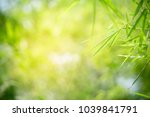 closeup nature view of green... | Shutterstock . vector #1039841791