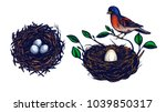 bird nest with branches set ... | Shutterstock .eps vector #1039850317