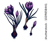 crocus hand drawn isolated... | Shutterstock .eps vector #1039858441