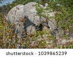 shy elephant hidden behind...   Shutterstock . vector #1039865239
