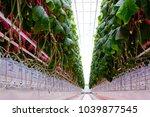 cucumber farm inside modern... | Shutterstock . vector #1039877545