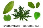leaf collection on white... | Shutterstock . vector #1039880461