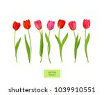 isolated tulips flowers element | Shutterstock .eps vector #1039910551