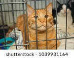 beautiful red cat in a cage... | Shutterstock . vector #1039931164