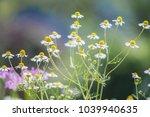 select focus a grass flowers or ... | Shutterstock . vector #1039940635