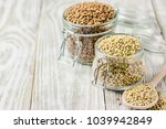 brown and green buckwheat in... | Shutterstock . vector #1039942849