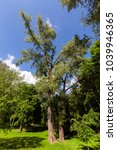 Small photo of high and low deciduous trees and bushes in the park in the summer season