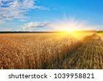 golden wheat field with blue... | Shutterstock . vector #1039958821