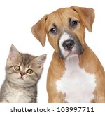 Stock photo kitten and puppy close up portrait on white background 103997711