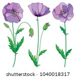 vector set with outline lilac... | Shutterstock .eps vector #1040018317