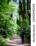 Man Walking Through The Woods ...
