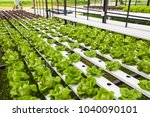 organic hydroponic vegetable... | Shutterstock . vector #1040090101
