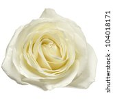 Stock photo white rose petals close up isolated 104018171