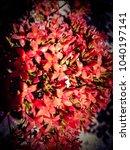 pink flower wallpaper  bunch of ... | Shutterstock . vector #1040197141