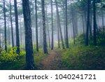 dreamy green forest on misty... | Shutterstock . vector #1040241721
