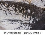 photo picture closeup old...   Shutterstock . vector #1040249557